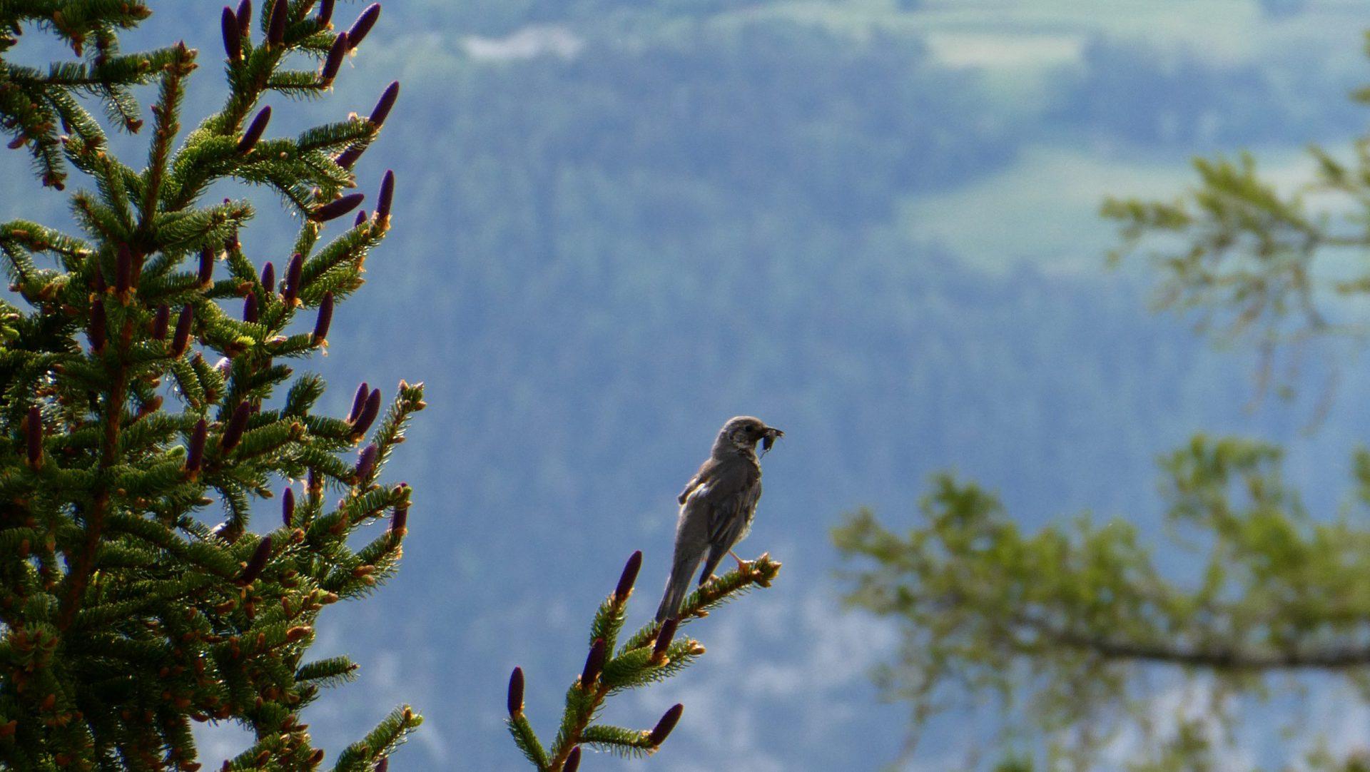 vogel in de tuin